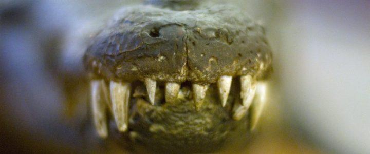 bébé a des douleurs à cause des dents qui poussent