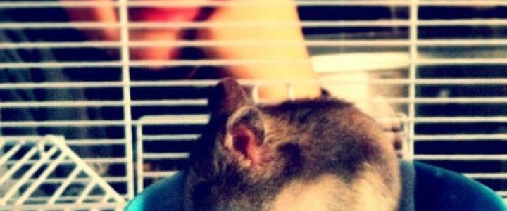enfant versus hamster, le match