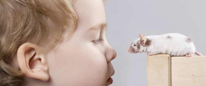 la petite souris et la dent